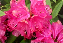 photo flowers / flowers