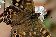 Butterflies / by Diana Larsen