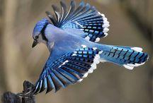 BIRDS & MORE BIRDS