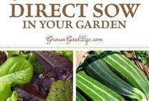sewing vegetables straight from seed