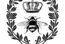 Paula bees