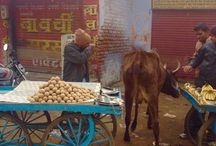 My India - North / Travel