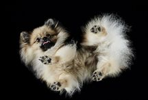"Chats et chiens mignons ""Ouiiii, j'adore jouer"""
