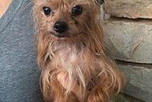 Adoptable Pets / Adoptable Pets