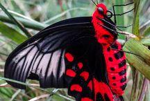 Butterfly/Motyle