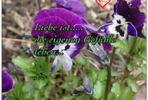 Liebe ist.... / für immer...