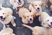✨♡Dogs.♡✨