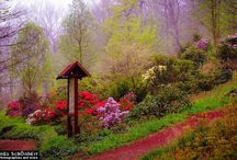 Woman in Rhododendron Park