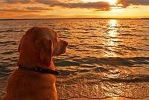 tramonto meraviglioso..per ora niente crocchette!