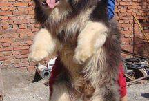 kutyu