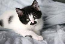 MOUSTACHES DE CHATS / Les vibrisses des chats