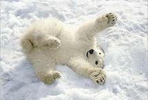 Vanessa loves Polar Bears