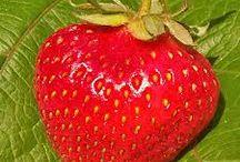 Projects to Try / Gdybacze dla klasy 5: Gdybym był truskawką, byłbym bardzo słodki.