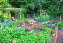Vegetable Garden / by French Country Renovation