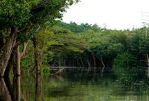 Parque do Jaú