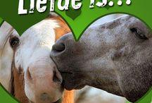 Horsecheck Valentine's Day  / Valentijnsdag, de dag van de liefde!  www.horsecheck.nl