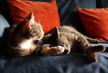 Cats / I love photography + I love my cats = cats' photos :)))