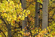 Autumn is a romantic season