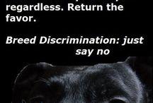 Breed Specific Legislation (BSL)