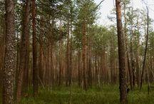 Вишера / Пермский край, г. Красновишерск  #вишера#красновишерск#природа#тайга#урал#ural