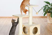 rascador gato
