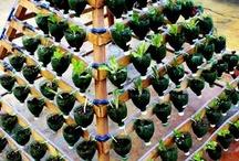 gardening / by Christen Hart