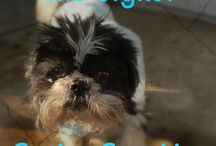 Oh My Shih Tzu / Looking for a quick way to find an article by Oh My Shih Tzu? Here is your spot. If you can't find what you are looking for let us know!