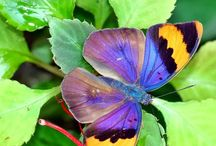 Butterflies repinned / Images of butterflies but not made by myself