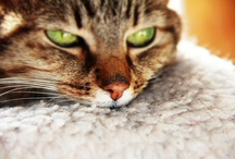 Cats / by A Clementina