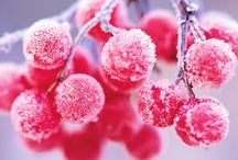 Floral Design - WINTER / Textures, Colours, Plants, Flowers, Materials, Inspirations