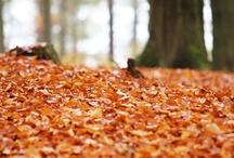 Herbst / Meine Heimat im Herbst...