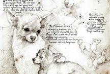 Inspiring chihuahua drawings