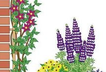 Garten -Pflanzen