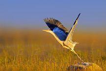Birds / The birds of Pilanesberg