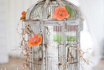 Bird cage Beauty