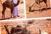 Eco & Nature / #Eco & #Nature - #Jordan