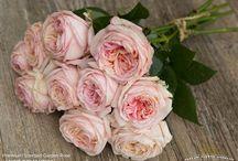 Flowers for Gemma's October wedding / Romantic blush flowers