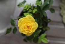 Minha horta e jardim / Amo o colorido das flores e o cheiro de mato! Aqui compartilho as flores e plantas do meu jardim! Porque viver perto delas me faz feliz! *-* Veja mais em: www.artecomquiane.com