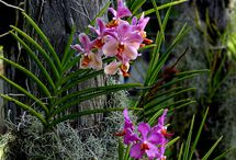 Flores~Orquídeas.