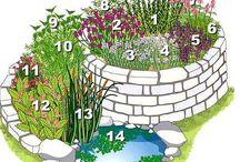 bylinky, zahradka