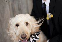 животные на свадьбах