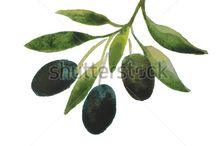 OLIVE TREES AND BRANCHES
