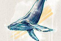 Desenho Baleia