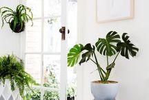 Jardin d hiver / Collection de plantes