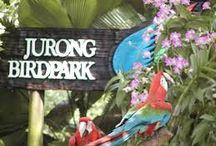Jurong Bird Park / Jurong Bird Park, is a tourist attraction in Singapore.