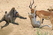 Állatok /Fauna