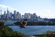 Australië - Sydney / De wereldstad bevat alle elementen om verliefd te worden.  Het openbaar vervoer in Sydney is goed geregeld, de treinen rijden op tijd, de prijzen zijn normaal en op zondag is het reizen met de trein en bus gratis en dat is handig, want met meer dan 70 stranden is het makkelijk relaxen in de grootste stad van Australië. Bekijk het Opera House en de Harbour Bridge, doe drankjes in Darling Harbour, ga stappen in Kings Cross en haal je souvenirs bij de marktkraampjes van Paddington.