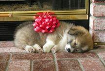 Puppy Love ! / by Michele Allen