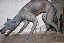 chupacabra thylacine