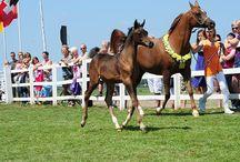 Arabian mare & foal ♥